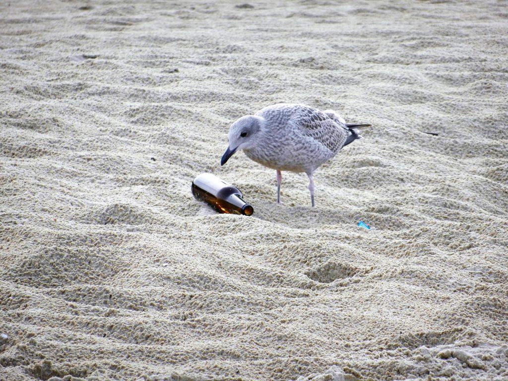 bouteille verre sable oiseau